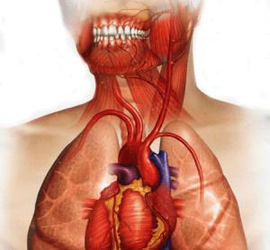 رابطه بهداشت دهان و بیماری قلبی