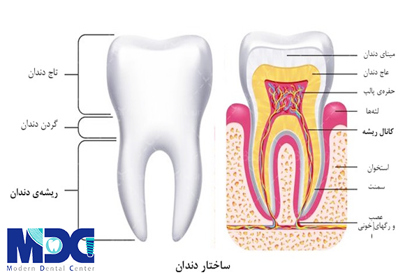 ساختار دندان _کلینیک دندانپزشکی مدرن