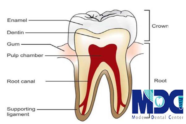 درمان ریشه-کلینیک دندانپزشکی مدرن